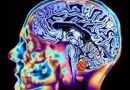 Neurobiologic Advances from the Brain Disease Model of Addiction